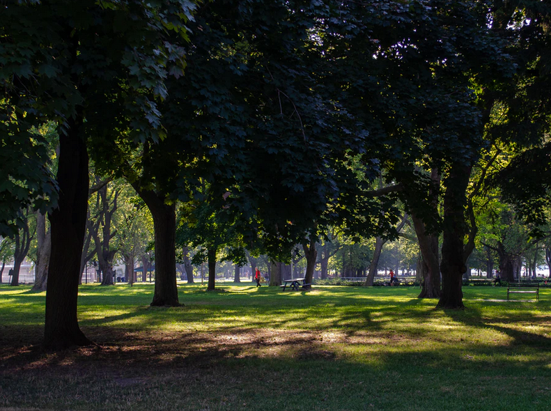 Image of a lush green trees in a Toronto park